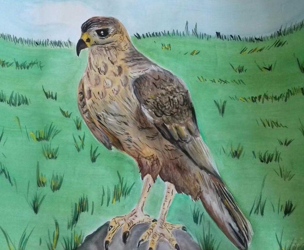 Альбом: Переможниця обласного етапу Всеукраїнської природоохоронної акції «Птах року - 2017»